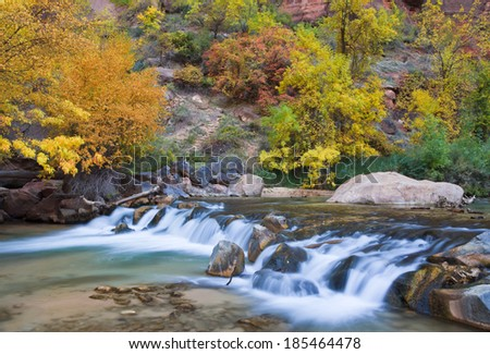 Fall color in the Narrows--the most famous slot canyon in Zion National Park, Utah  - stock photo