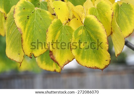 fall color leaf in autumn - stock photo