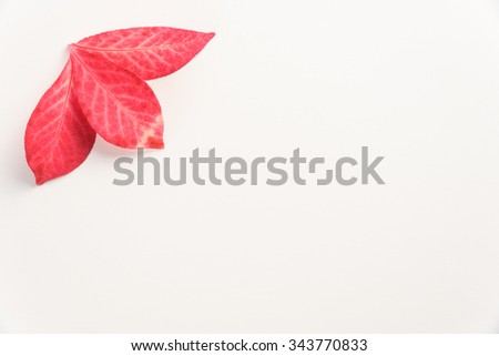 Fall color, three red leaves arranged on a white background
