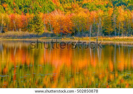 Fall colorful trees reflected on a calm large Beaver Pond in Northern Maine