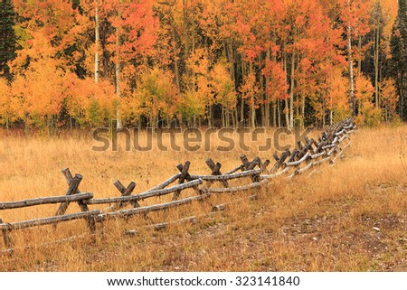 Fall colors and a wooden fence, Utah, USA. - stock photo