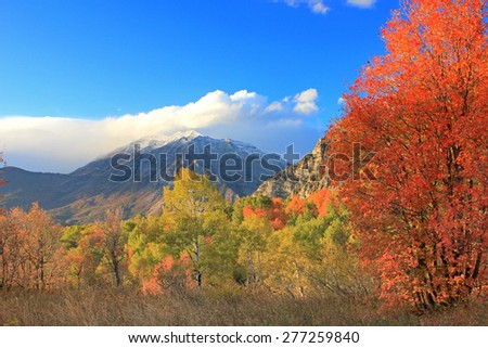 Fall colors in the mountains above Provo, Utah, USA.