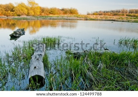 Fall comes to the bog - stock photo