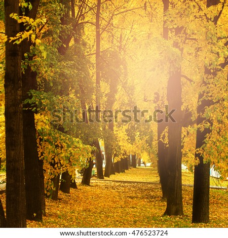 Fall concept, yellow autumn nature in city park outdoors