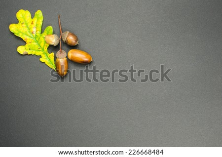 Fall decoration with oak tree leaf and acorns at dark background - stock photo