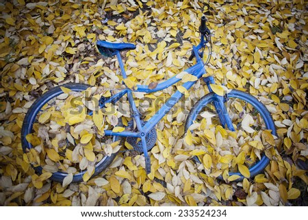 Fall. Filled up the bicycle with yellow leaves.  - stock photo