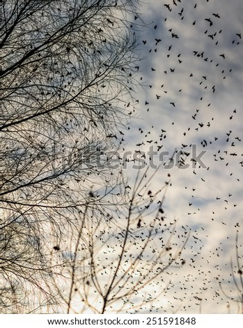 Fall - flock of birds  migrating south - stock photo