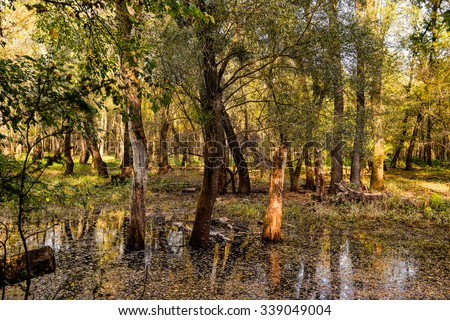 Fall floodplain forest and water - stock photo