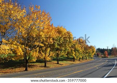 Fall foliage and road - stock photo
