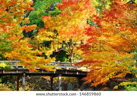 Fall foliage at  in Nagoya, Japan. - stock photo