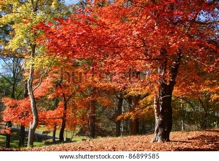 Fall foliage in Pennsylvania - stock photo