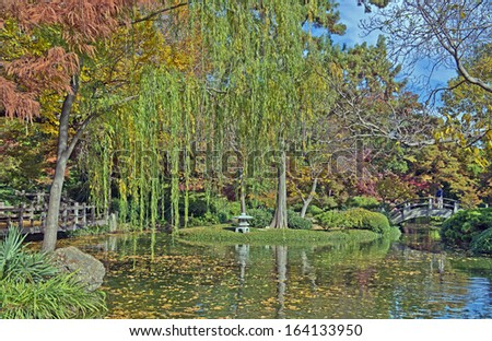 Fall Foliage Japanese Garden Fort Worth Stock Photo (Edit Now ...