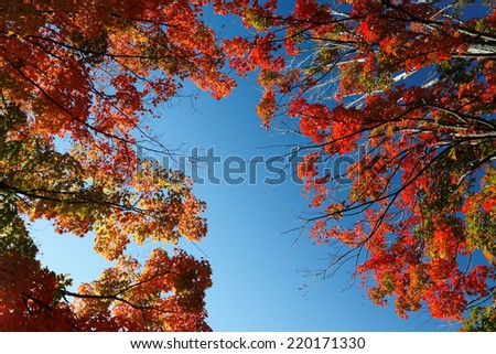 fall foliage Massachusetts  - stock photo