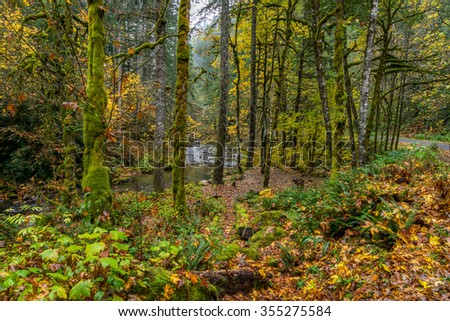 Fall Foliage,Skate Creek Road (Forest Road 52), Mount Rainier National Park - stock photo