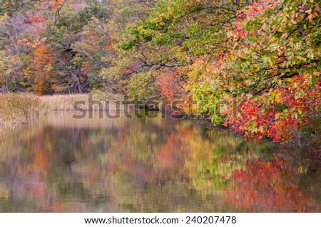 Fall foliage taken at Constitution Marsh in Cold Spring, NY - stock photo
