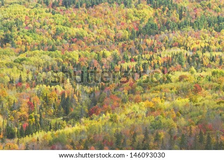 Fall forest in  Mount Blue State Park from Center Hill Weld, Maine. - stock photo