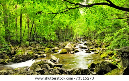 fall forest stream Smolny in russian primorye reserve - stock photo