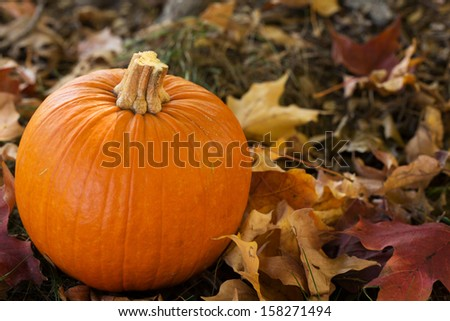 fall Halloween pumpkin in colorful leaves close up