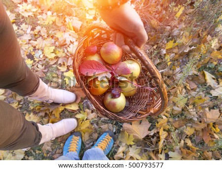 Fall Harvest seasonal Theme Fruits and Autumnal Leaves in traditional Basket