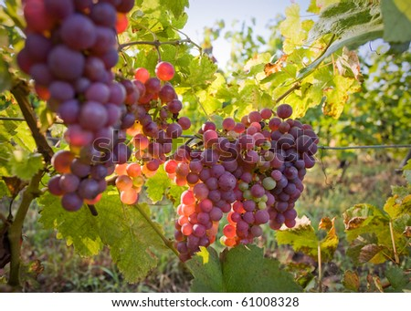 Fall harvest time. - stock photo