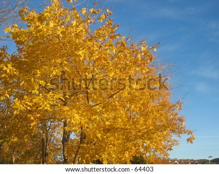 Fall in park. - stock photo