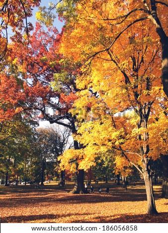 Fall in Toronto - stock photo