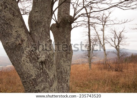 Fall landscape: Bare trees of Shenandoah National Park in the Blue Ridge Mountains in Virginia - stock photo