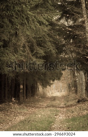 Fall landscape. Country road spruce alley in the autumn forest. Misty hazy autumnal day. Retro vintage image - stock photo