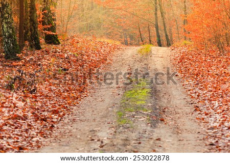 Fall landscape. Country road with red orange leaves in the autumn forest. Sunny autumnal day in Poland - stock photo