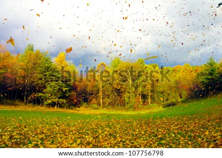 Fall Leaf Blow in Ohio - stock photo
