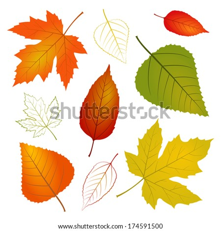 Fall leaf illustration - stock photo