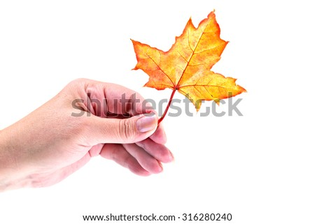 Fall leaf in women hand isolated on white - stock photo