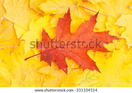 fall leaf on autumn background
