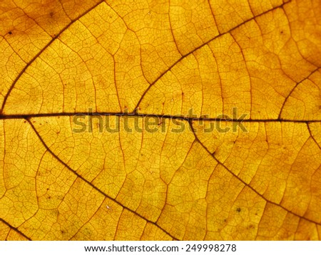 fall leaf or yellow leaf background texture - stock photo