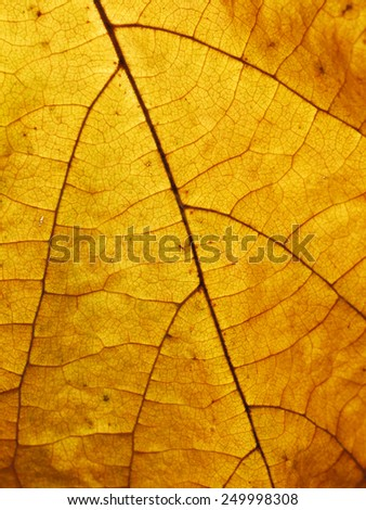 fall leaf or yellow leaf background texture