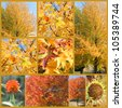 Fall leafs collage - stock photo