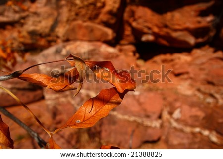 Fall leaves and red rocks