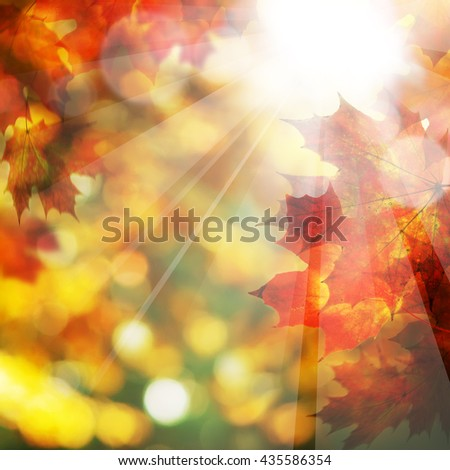 Fall Leaves and Sunlight. Autumn Background - stock photo