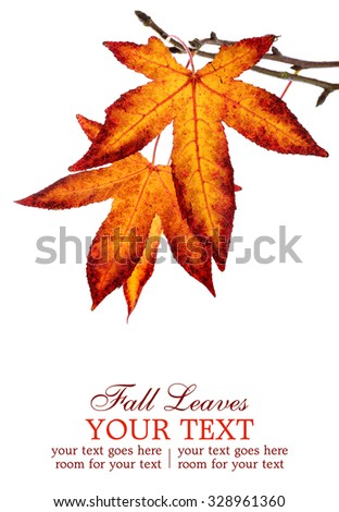 Fall leaves branch, isolated on a white background - stock photo