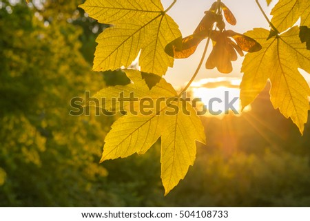 Fall leaves close up and golden sun