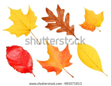 Fall Leaves Collection isolated on white. Autumn