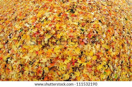 Fall leaves in a park - stock photo