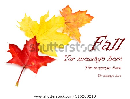 Fall leaves isolated on white with copy space - stock photo