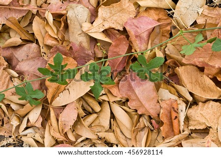 Fall leaves of an autumn background,fresh and dried leaves