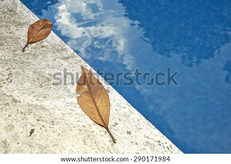 Fall leaves on the edge of a blue swimming pool water  - stock photo