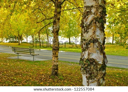Fall leaves surround the recreation path in Green Lake Park.  Seattle, WA. - stock photo