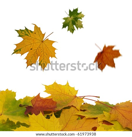 fall of colorful  leaves over a white background