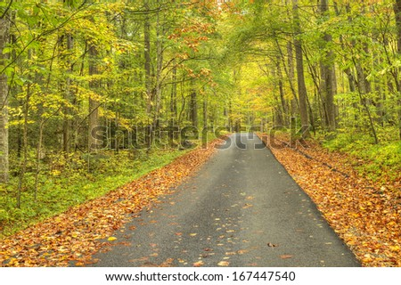 Fall path in Tennessee - stock photo