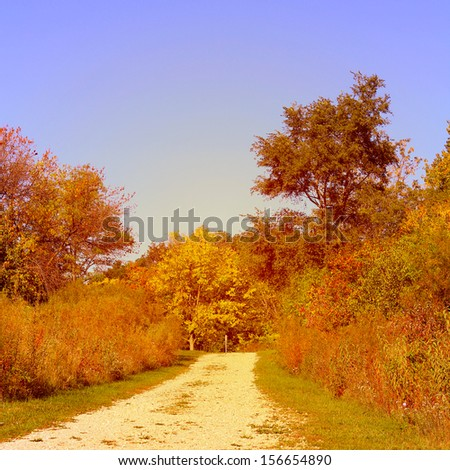 Fall path in the forest preserve