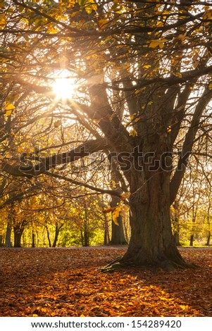 Fall photo of a tree with sun rays coming through branches with yellow leaves